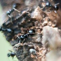 муравьиная суета :: Тася Тыжфотографиня