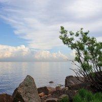 на Финском заливе... :: Андрей Вестмит