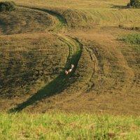 Путь домой. :: Георгий