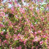 сады цветут :: Димончик