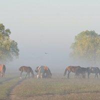 Туман :: Сергей Басов
