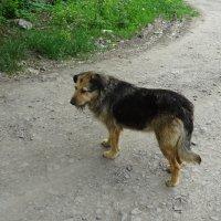Дачная собака Машка :: татьяна