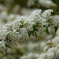 Весна :: Александра Довгалюк