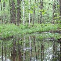озеро в лесу :: Светлана Рябова
