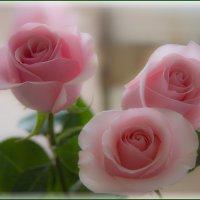 Розы, еще не завяли :: Грег