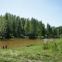 Майский солнечный день в Ржевском лесопарке :: Елена Павлова (Смолова)
