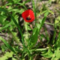 дикий цветок IMG_6673 :: Олег Петрушин