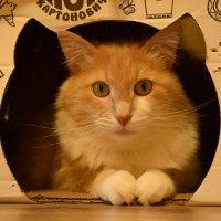Кот в домике :: Александр
