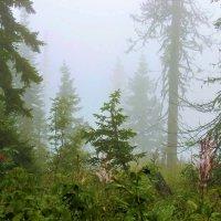 Туман в лесу :: Сергей Чиняев