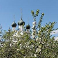 В саду Ростовского кремля, яблони цветут :: Николай Белавин