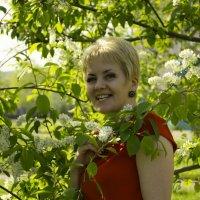 Ах,черемуха белая! :: Светлана Бурлина