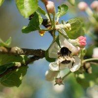 Как аромат цветков проникает в самую глубину :: Владимир Гилясев