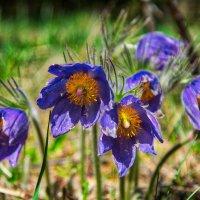 майские цветы :: Alexandr Staroverov