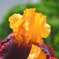 Сама весна :: Тамара Бедай