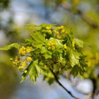 Цветущий май... #2 :: Андрей Вестмит