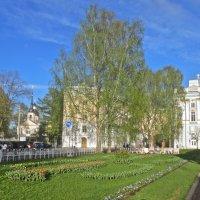 май в Пушкине :: Елена