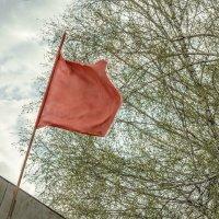 Красное знамя :: Елизавета Журавлева