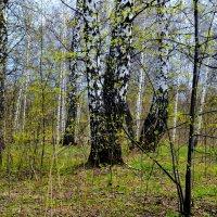 Робкие шаги весны :: Татьяна Лютаева