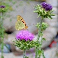 Бабочка :: Артур Хороший