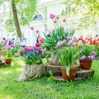 Фестиваль тюльпанов. :: Виктор Орехов