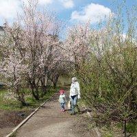 Весна майская :: Олег Афанасьевич Сергеев