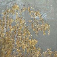 Золотая, но - печальная... :: Syntaxist (Светлана)