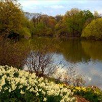 В Центральном парке Нью-Йорка. :: Тамара