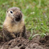 Танки грязи не боятся! :: Екатерина Торганская