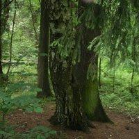 в лесу :: Димончик