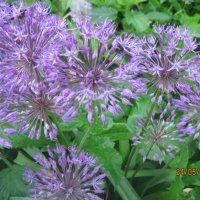 цветы :: Smit Maikl