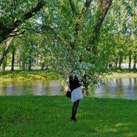 Яблоневый цвет... :: Sergey Gordoff