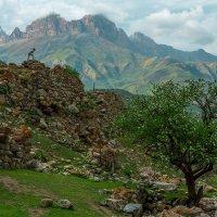 Кабардино-Балкария, Черекское ущелье :: Руслан Комаров