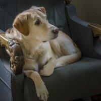 Любимое кресло... :: Ирина Шарапова