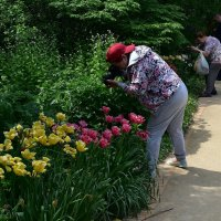 Время цветов :: dindin