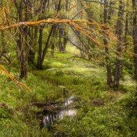 лесная река Крапиивня :: Василий Королёв