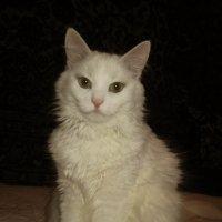 Кошка Соня. фото-1. :: Nata