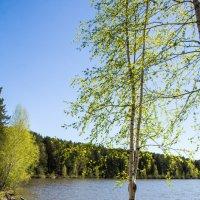 Пирс на озере :: Вадим Басов