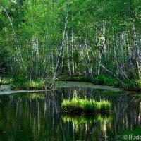 На болотах :: Сергей