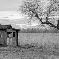 Опустошение :: Валерий Михмель