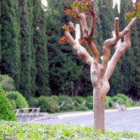 Пробуждение дерева :: Валерий Новиков