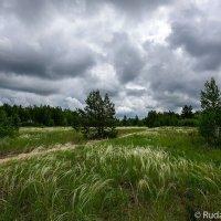Ковыль под грозовым небом :: Сергей