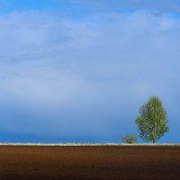 Одинокое дерево :: Nikolay Svetin