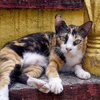 Кошка при буддийском храме. :: Alex