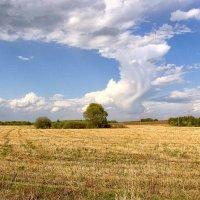 Плывут над полем облака :: Nina Karyuk