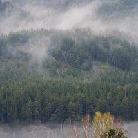 Туман, туман :: Анатолий Соляненко