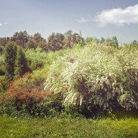 Ботанический сад. Почти Моне ))) :: Юлия Новикова