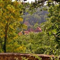 Через золотой  дождь ..долина Таубер.. :: backareva.irina Бакарева
