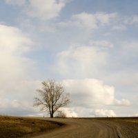Одинокое :: Виктория Большагина