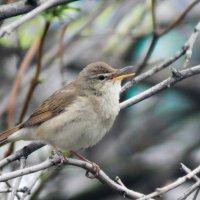 Птичка-невеличка :: Екатерина Богомолова