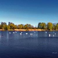 Озеро :: Liudmila LLF